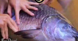 یاخدا این ماهی چطور اینارو خورده